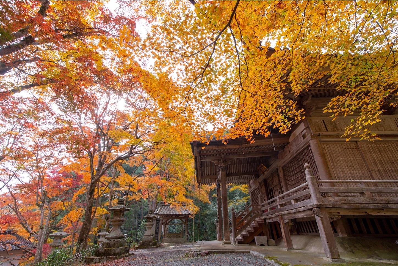 f:id:Shotetsuan:20200302074156j:image