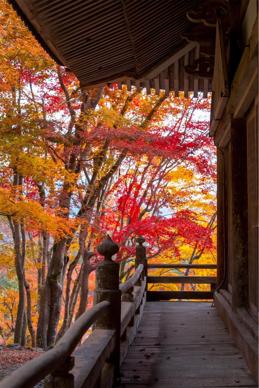 f:id:Shotetsuan:20200302074206j:image