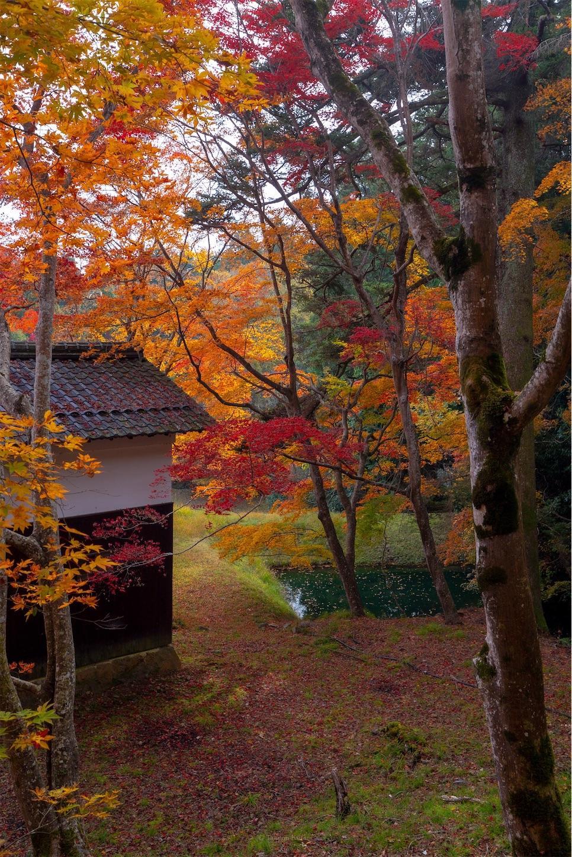 f:id:Shotetsuan:20200302074231j:image