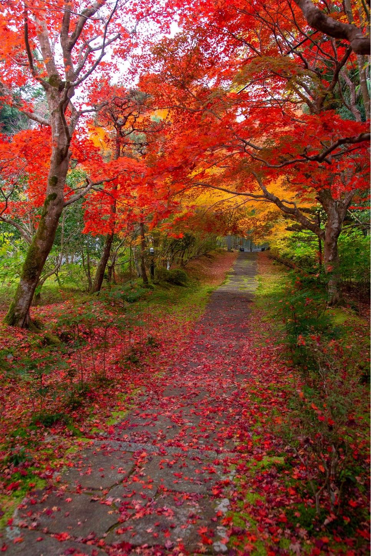 f:id:Shotetsuan:20200302074525j:image
