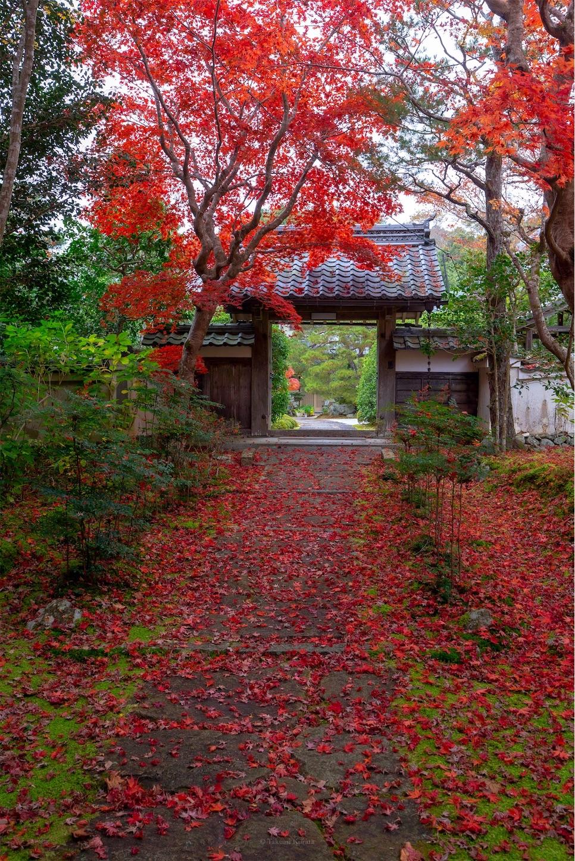 f:id:Shotetsuan:20200302074529j:image