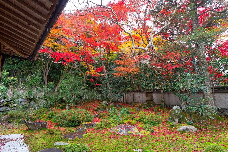 f:id:Shotetsuan:20200302074537j:image