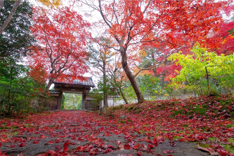f:id:Shotetsuan:20200302074541j:image