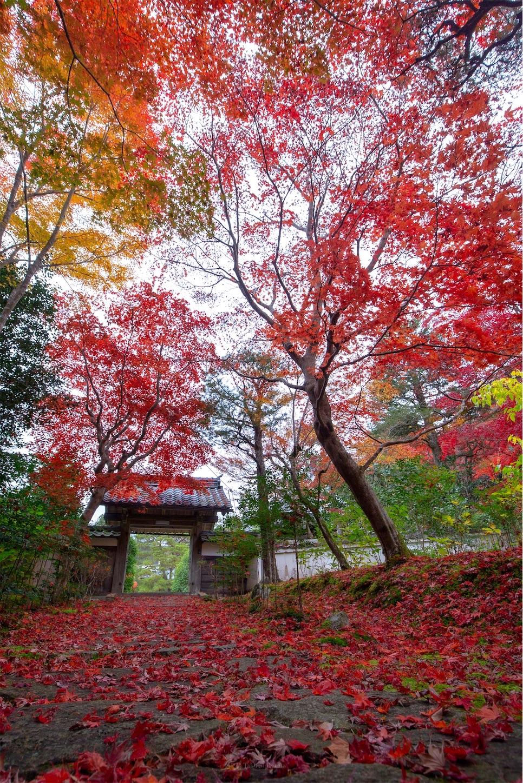 f:id:Shotetsuan:20200302074551j:image