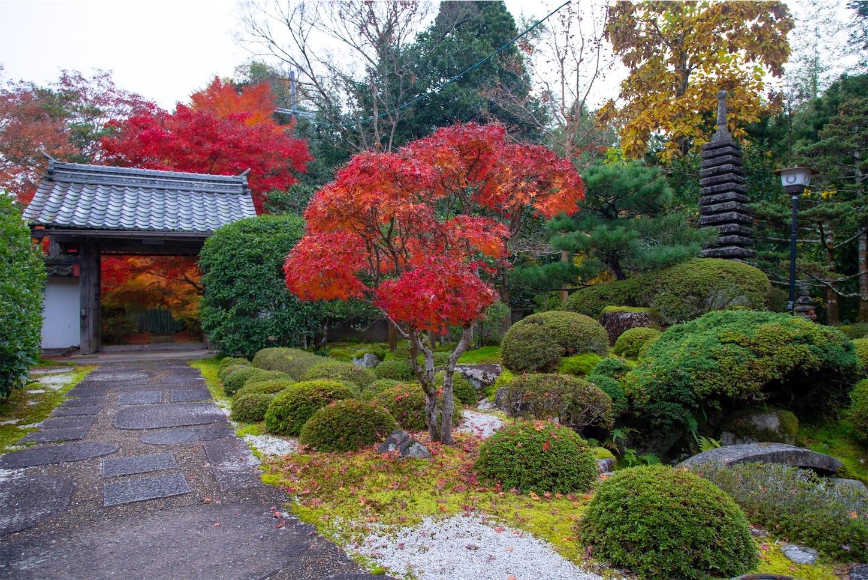f:id:Shotetsuan:20200302074555j:image