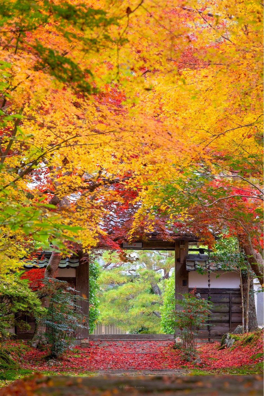 f:id:Shotetsuan:20200302074559j:image