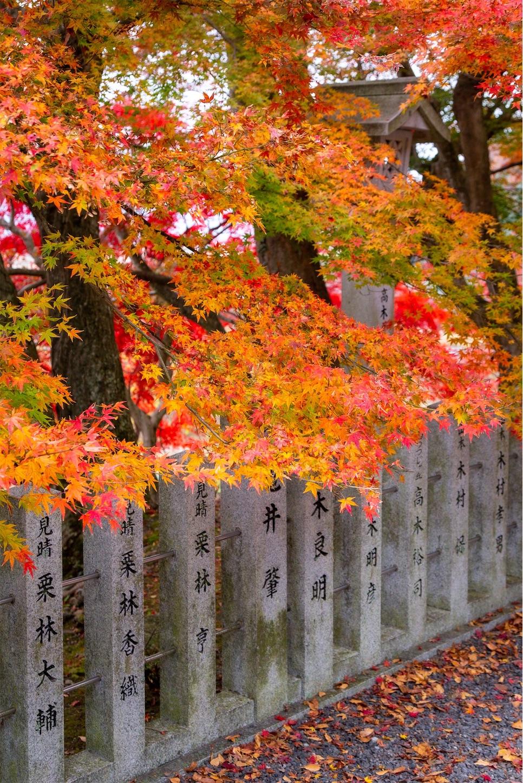 f:id:Shotetsuan:20200302074811j:image