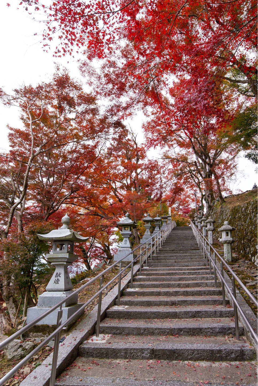 f:id:Shotetsuan:20200302074826j:image