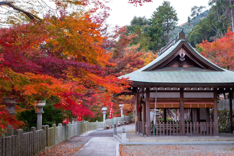 f:id:Shotetsuan:20200302074832j:image