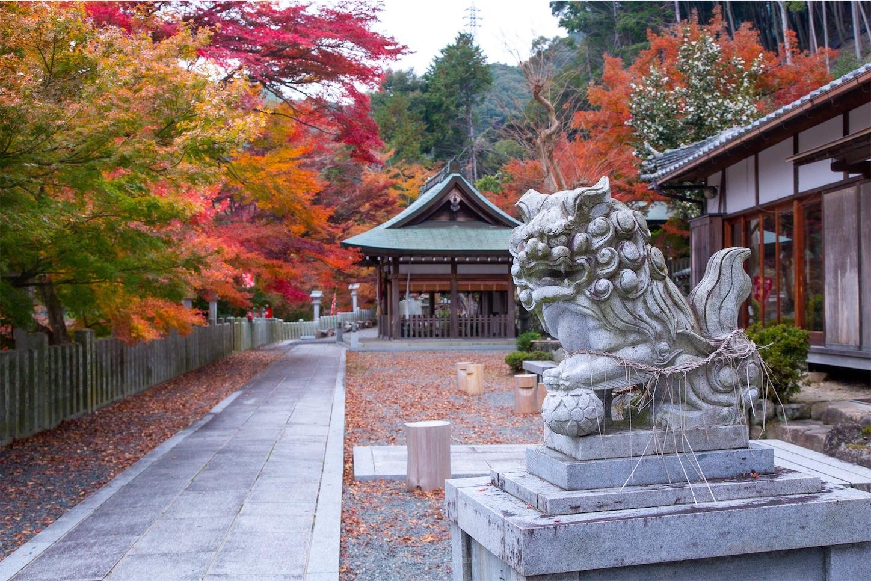 f:id:Shotetsuan:20200302074837j:image