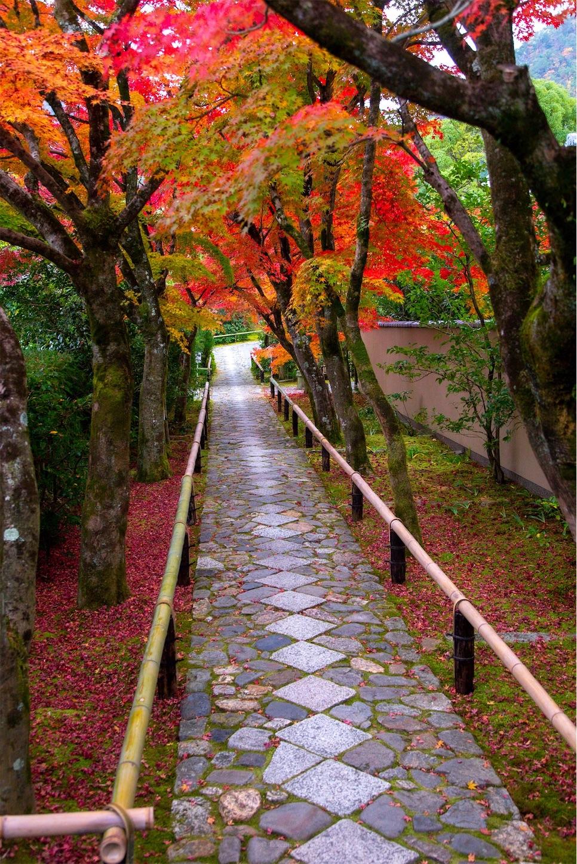f:id:Shotetsuan:20200302075259j:image