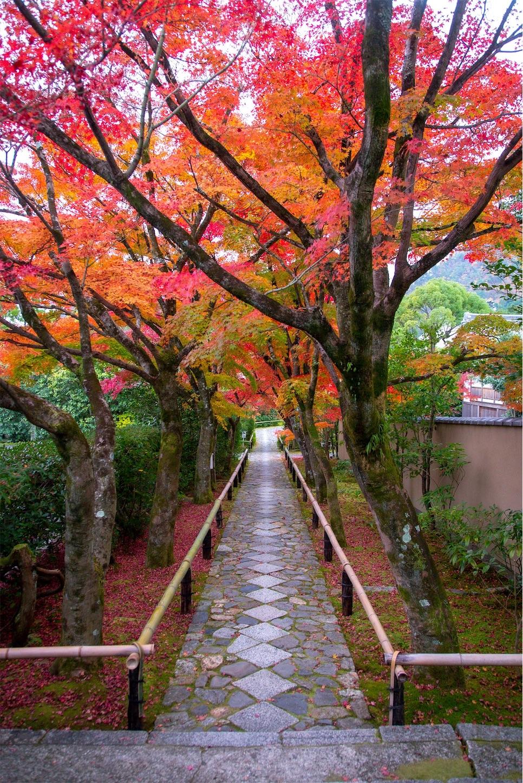 f:id:Shotetsuan:20200302075304j:image