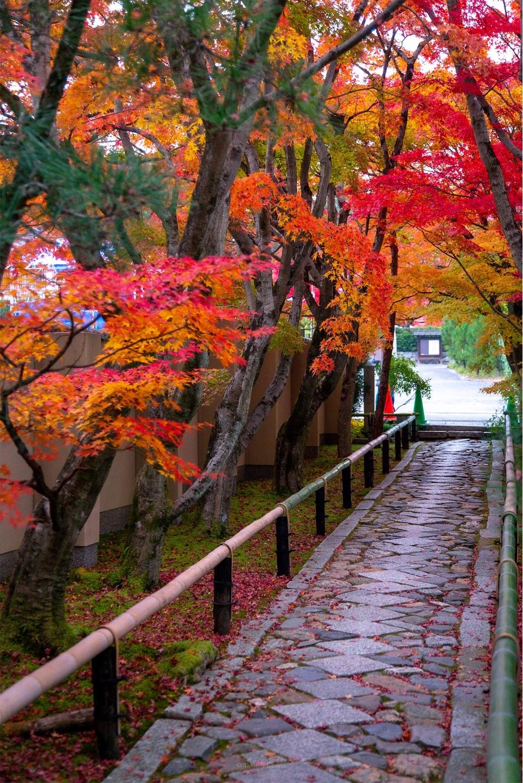 f:id:Shotetsuan:20200302075321j:image