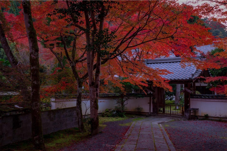 f:id:Shotetsuan:20200302075541j:image