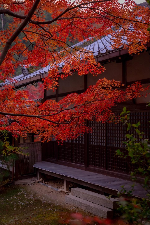 f:id:Shotetsuan:20200302075546j:image