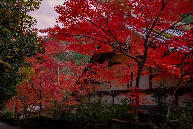 f:id:Shotetsuan:20200302075609j:image
