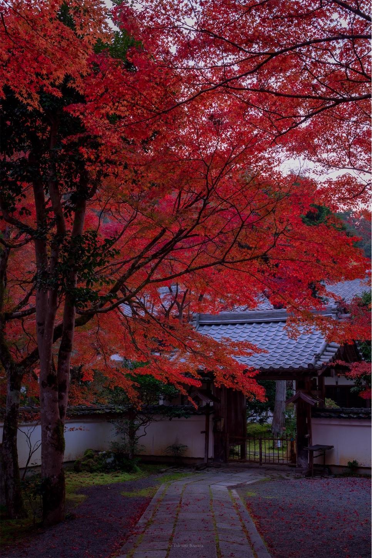f:id:Shotetsuan:20200302075613j:image