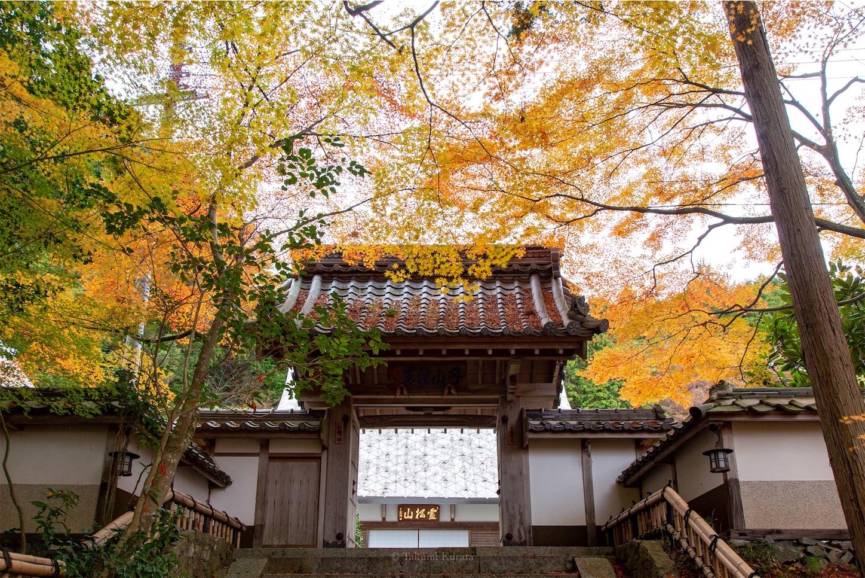 f:id:Shotetsuan:20200302084948j:image