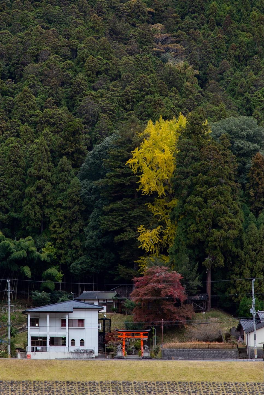 f:id:Shotetsuan:20200302172333j:image