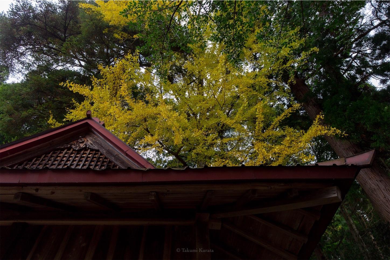 f:id:Shotetsuan:20200302172358j:image