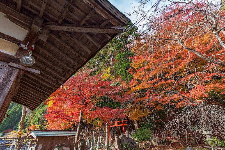 f:id:Shotetsuan:20200302172735j:image
