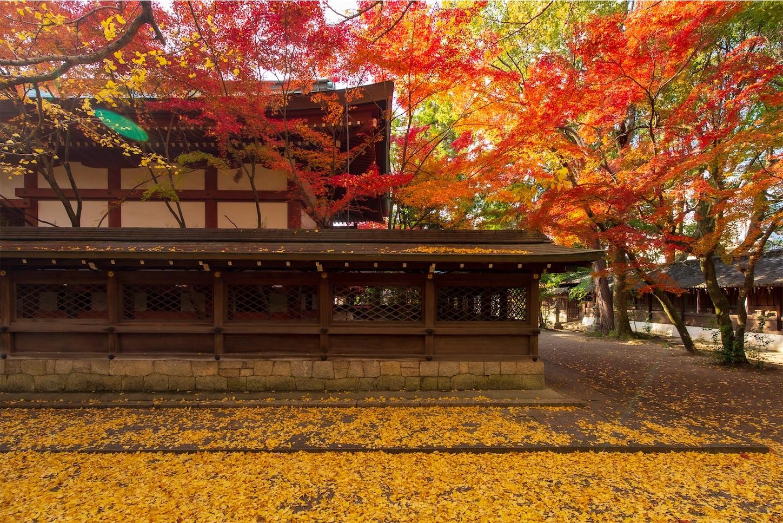 f:id:Shotetsuan:20200302181355j:image