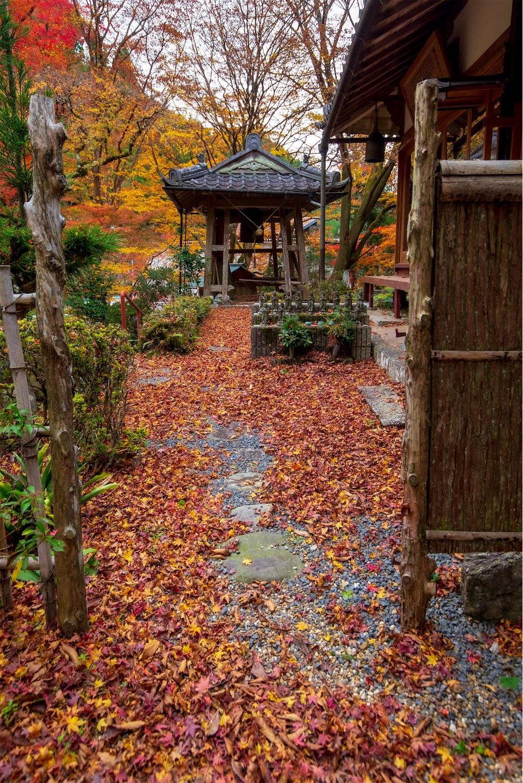 f:id:Shotetsuan:20200302181808j:image