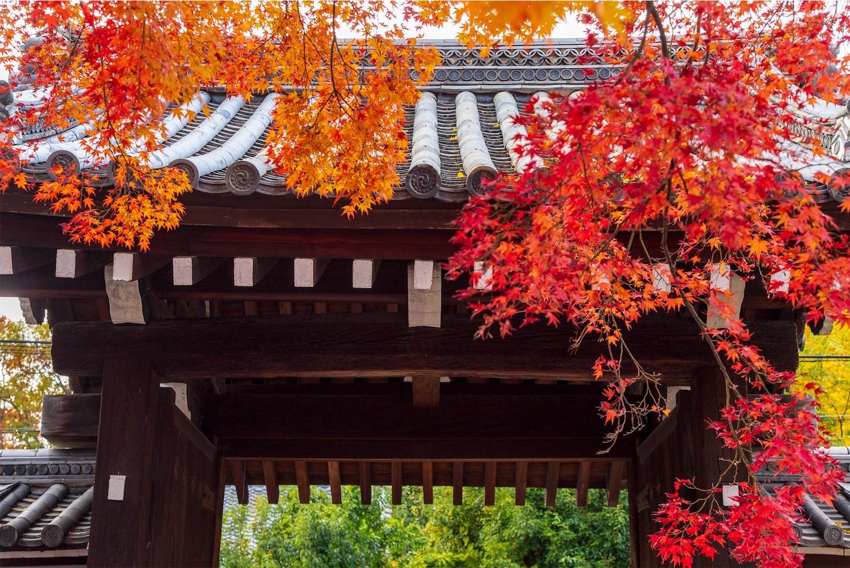f:id:Shotetsuan:20200302182020j:image