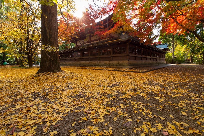f:id:Shotetsuan:20200302182405j:image
