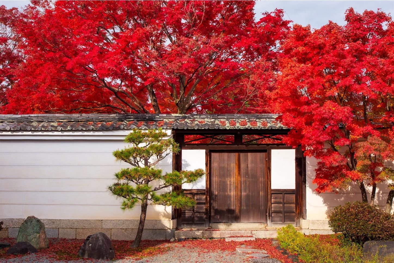 f:id:Shotetsuan:20200302182552j:image