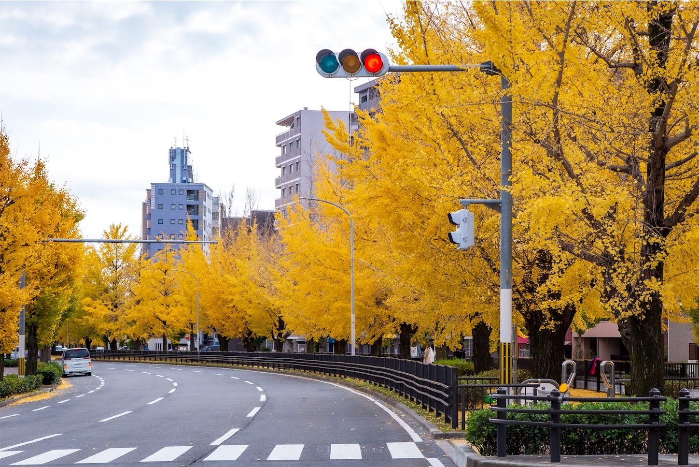 f:id:Shotetsuan:20200302183148j:image