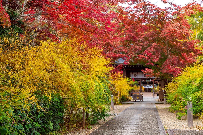 f:id:Shotetsuan:20200302183213j:image