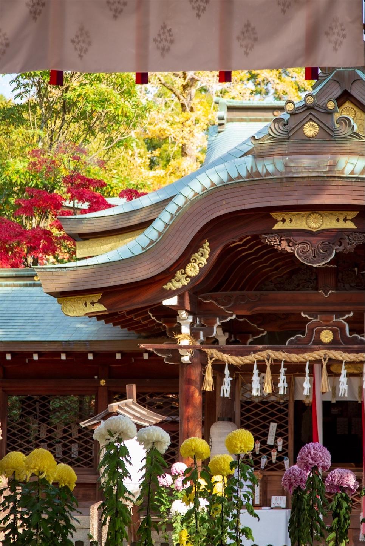 f:id:Shotetsuan:20200302183320j:image