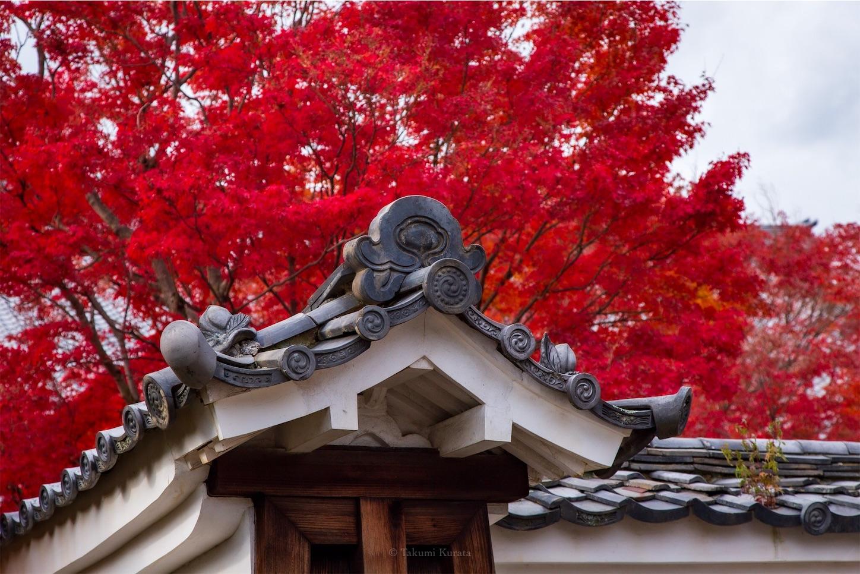 f:id:Shotetsuan:20200302183713j:image