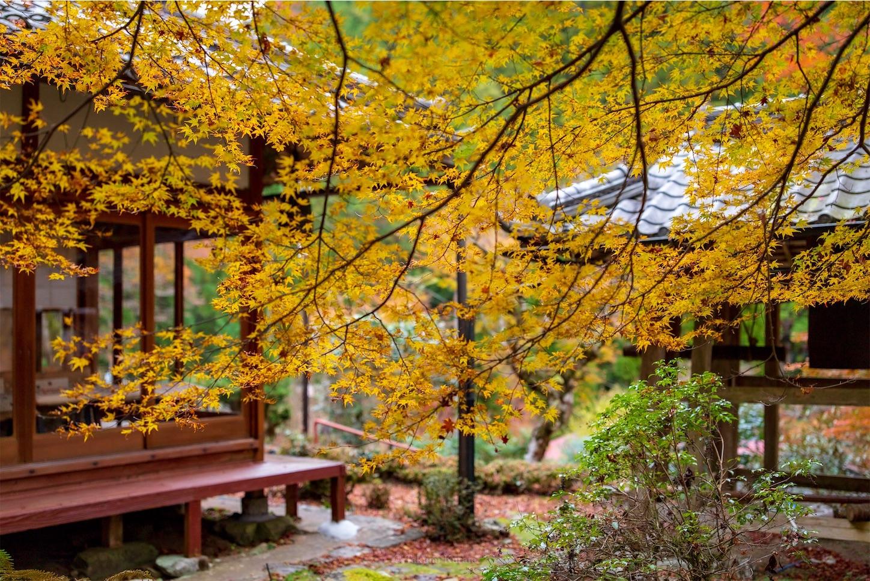 f:id:Shotetsuan:20200302184112j:image