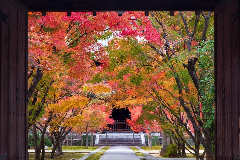 f:id:Shotetsuan:20200302184836j:image