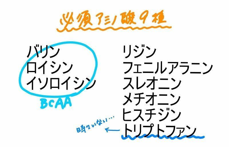 f:id:Sig-Maru:20210209020332j:plain