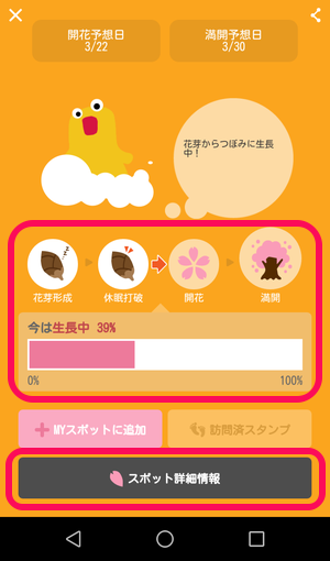 桜 開花情報