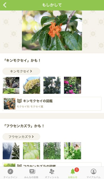 植物の名前