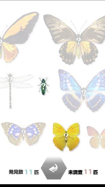 昆虫を調べる
