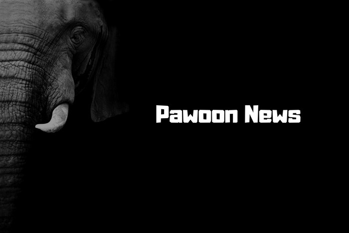 PawoonNewsとは