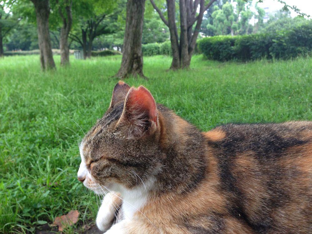 公園 猫2