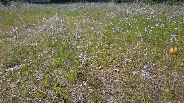 f:id:SmallForest-NaturalFarm:20170505214644j:image