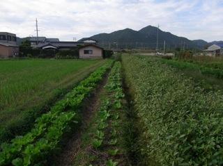 f:id:Small_Vegetable:20101012200722j:image