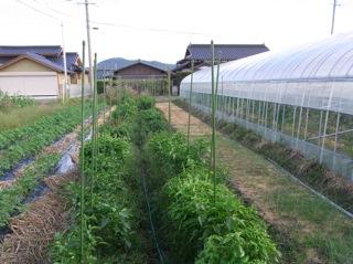 f:id:Small_Vegetable:20101012203951j:image