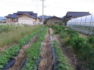 f:id:Small_Vegetable:20101012204005j:image