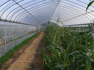 f:id:Small_Vegetable:20101012204312j:image