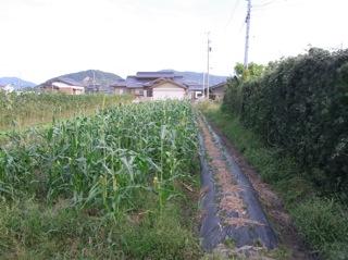f:id:Small_Vegetable:20101012211636j:image