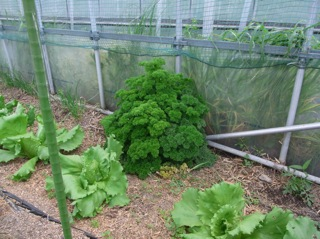 f:id:Small_Vegetable:20110428191613j:image