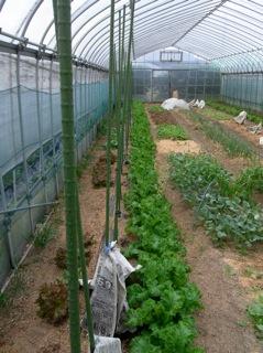 f:id:Small_Vegetable:20110428191621j:image
